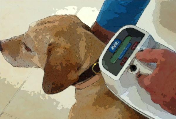 Registro de identificación de animales de compañia de La Rioja (RIAC)